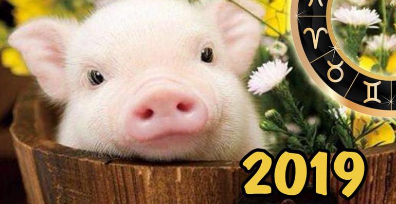Как встретить новый год 2019?