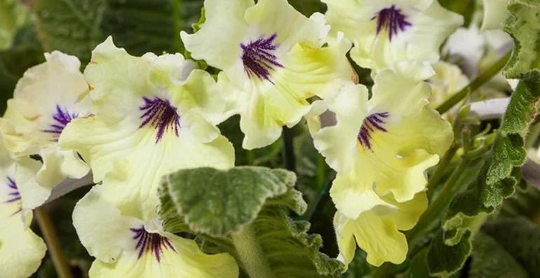 Необычный цветок для дома