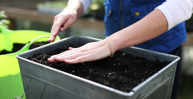 Обеззараживание почвы для рассады