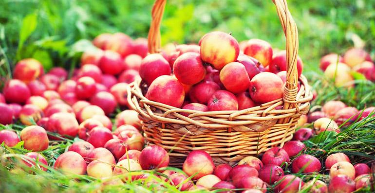 Закладываем яблоки на хранение
